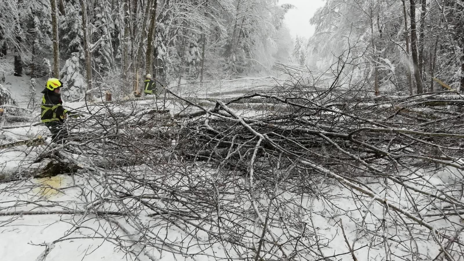 Zig Bäume werden abgeschnitten, abtransportiert und auf freie Lagerflächen abgelegt.