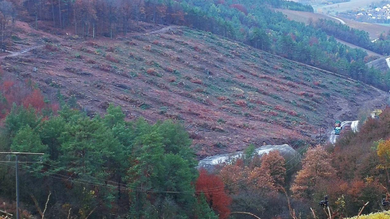 Waldrodung für Steinbruch bei Thüngersheim