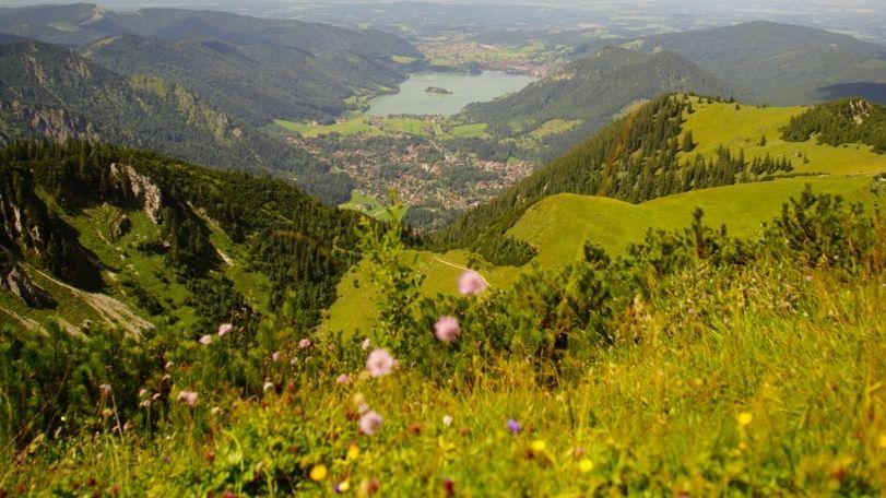 Bergblumenwiese mit Blick auf den Schliersee.