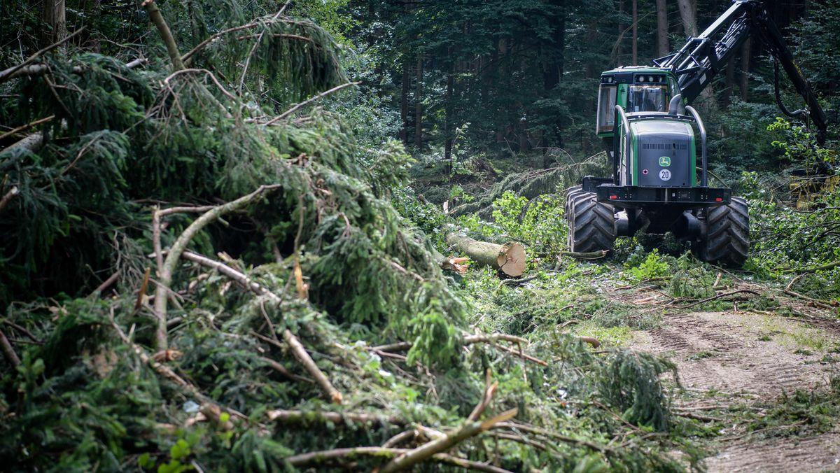 Symbolbild: Bauarbeiten im Neuburger Wald