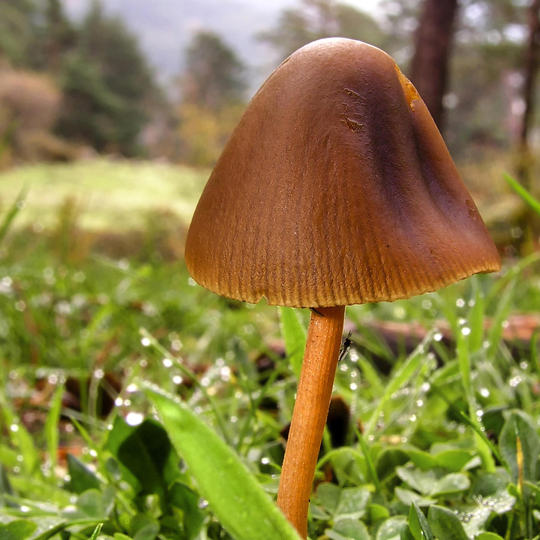 Alleskönner Pilze - Vom Baustoff bis zum Bodenreiniger