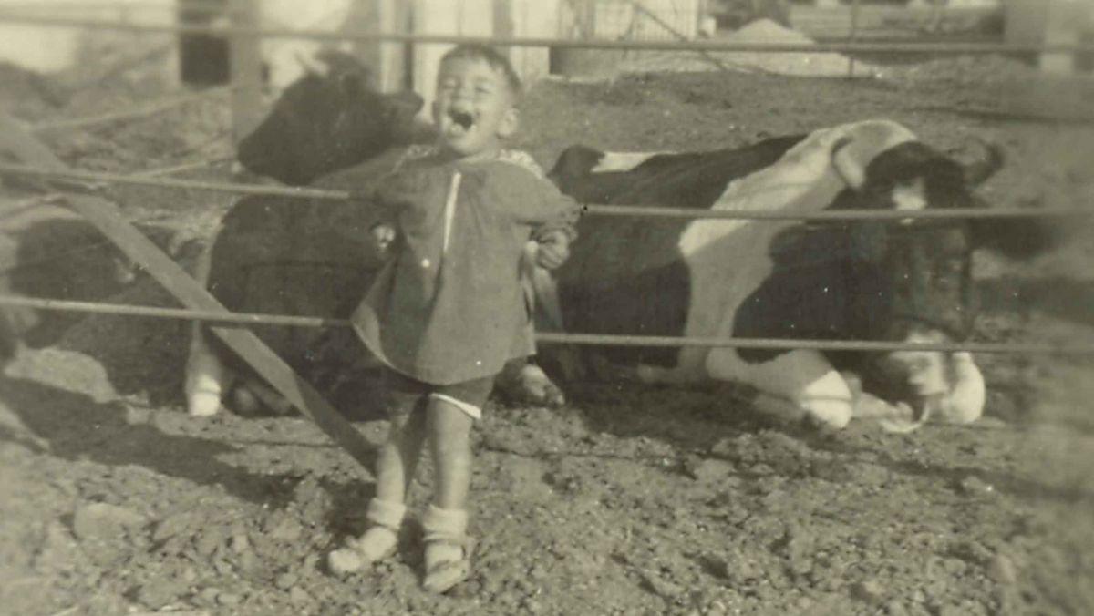 Schwarz-weiß Foto von Michael Strauss kurz nach der Einwanderung. Es steht lachend an einem Zaun vor zwei Kühen.