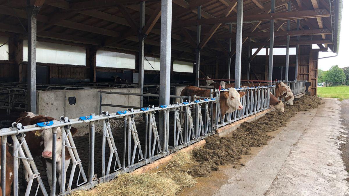 Kühe stehen in einem Offenstall
