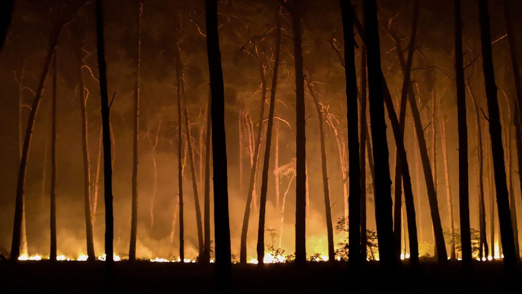 Brandenburg, Jüterbog: Der Waldbrand in der Nähe von Jüterbog.