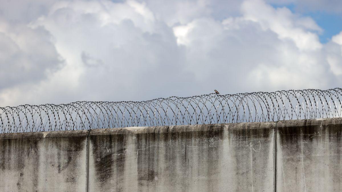 Ein winziges Vögelchen sitzt auf dem Natodraht einer Gefängnismauer.
