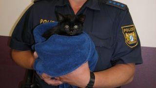 Ein Polizist hält die gerettete Katze, eingewickelt in ein Handtuch, in den Händen
