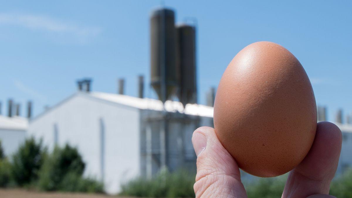 Ein Ei wird vor das Betriebsgelände der Firma Bayern-Ei gehalten