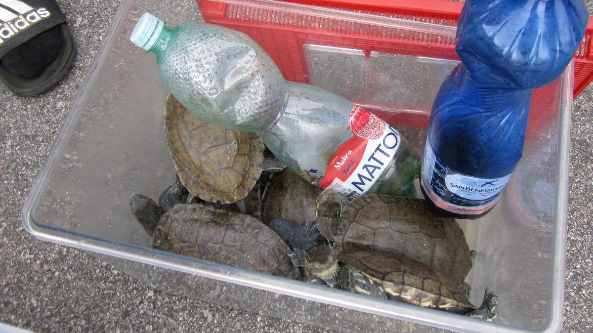 Die beschlagnahmten Schildkröten