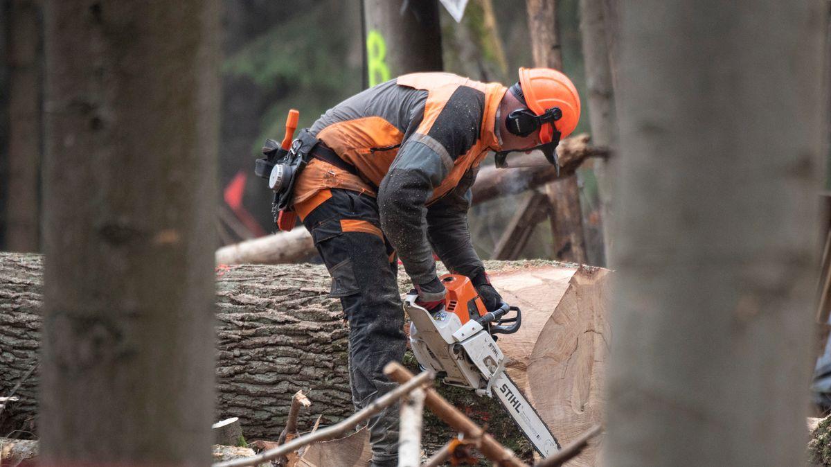 Ein Waldarbeiter zerlegt frisch gefällte Bäume in der Rodungsschneide im Wald.
