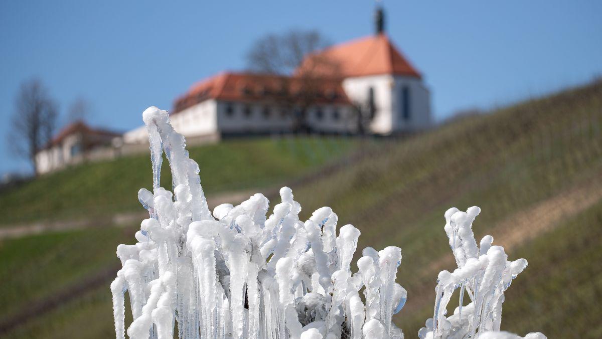 Von Eis überzogene Pflanzen in der Nähe von Volkach