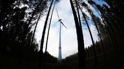 Windrad im Wald   Bild:dpa-Bildfunk/Oliver Berg