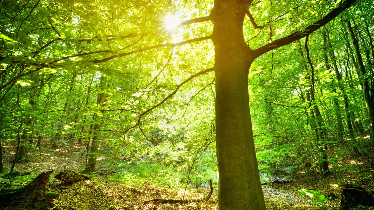 Symbolbild: Naturwald