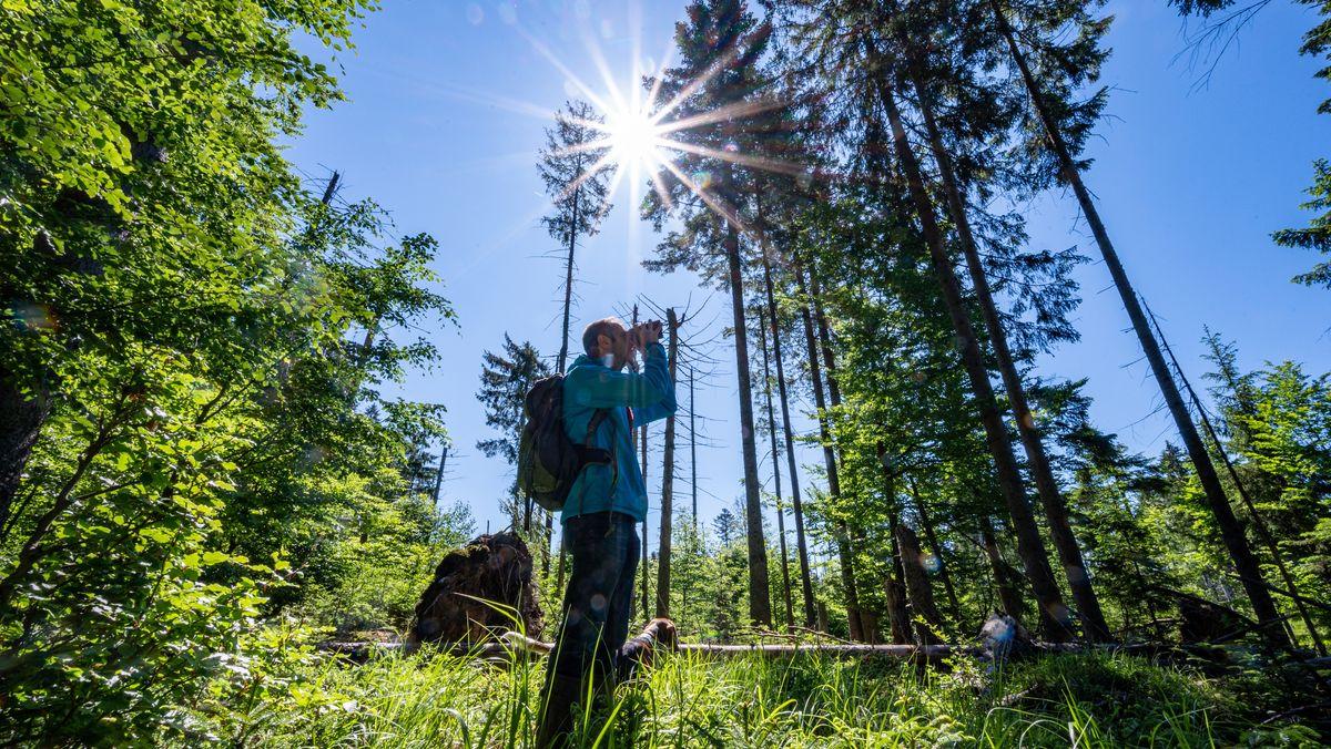 Wanderer im Bayerischen Wald.