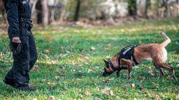 Symbolbild: Polizeihund bei Suchaktion | Bild:BR/Fabian Stoffers