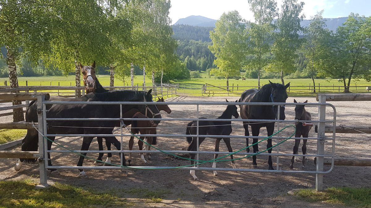 In den Stall darf man wegen Corona nicht, dafür aber zu den Pferdekoppeln, um den Nachwuchs zu bestaunen