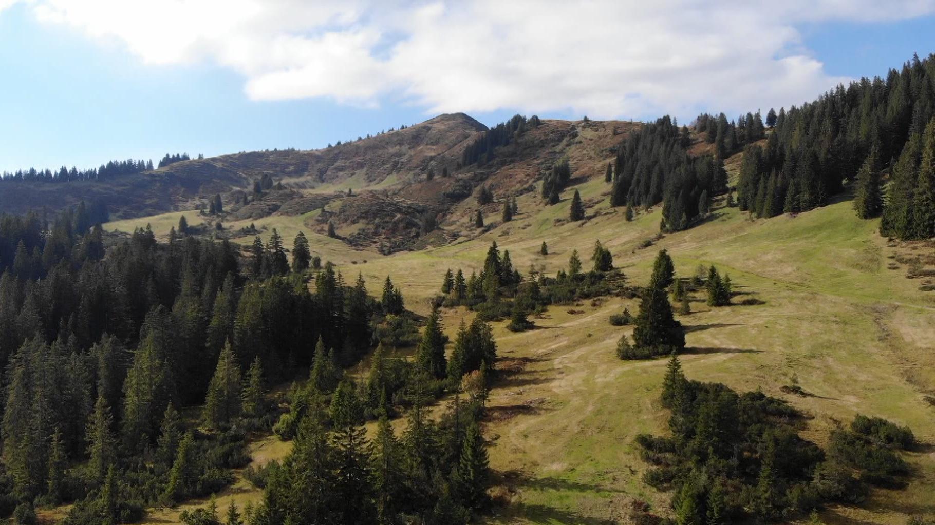 Berggebiet am Riedberger Horn