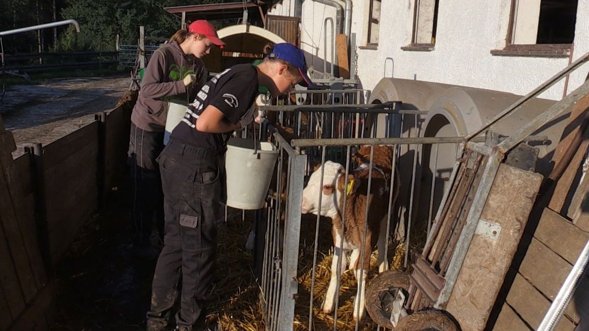 Die Nachwuchs-Landwirtinnen füttern die Kälber am Köppl-Hof