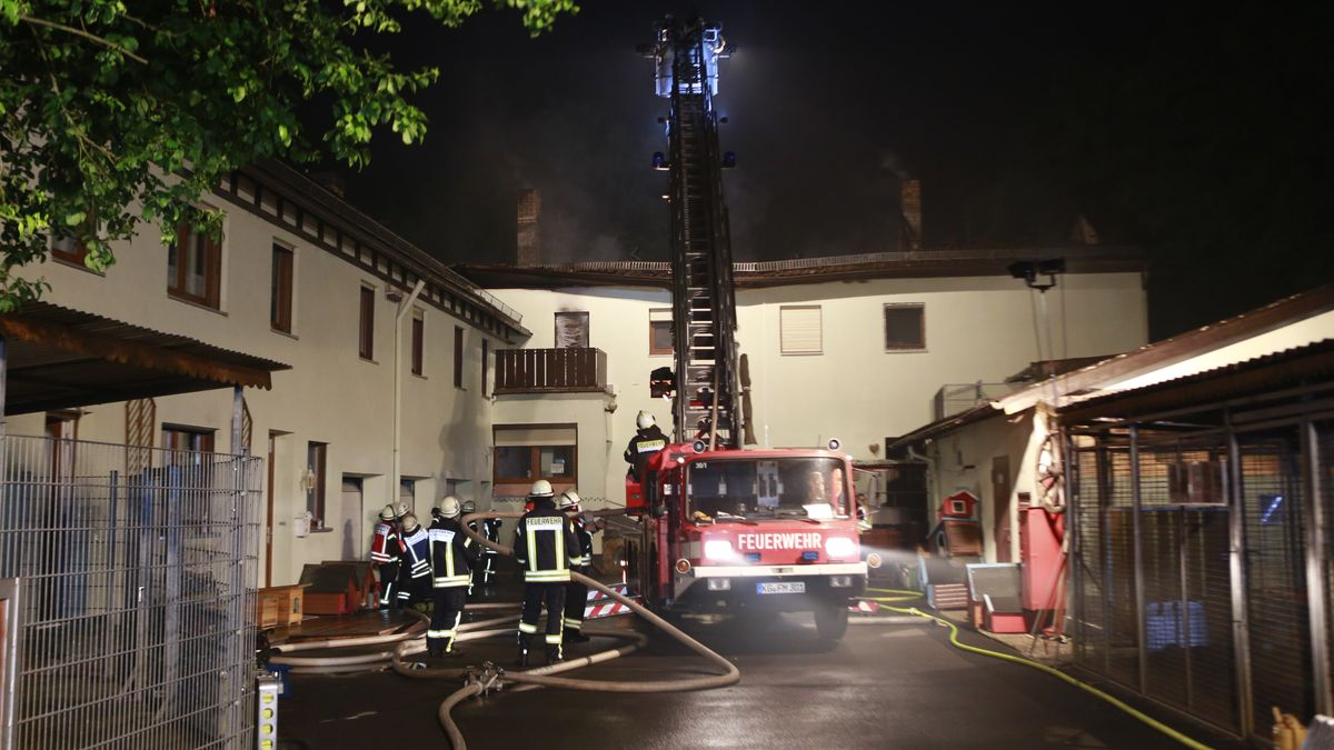 Große Hilfsaktion nach Brand in Tierheim angelaufen