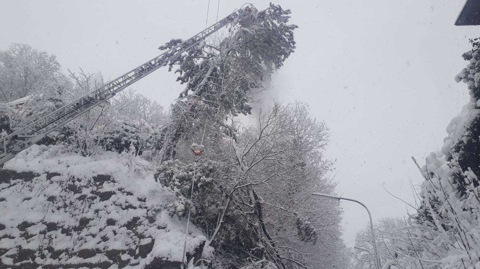 Umgeknickte Bäume machen der Landshuter Feuerwehr viel Arbeit