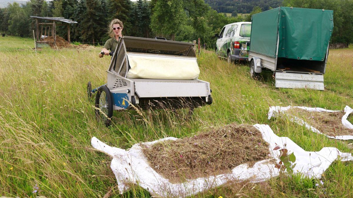 Rangerin Berit Arendt beim Abladen von Saatgut im Naturpark Spessart