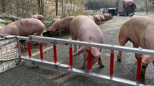 Unfall mit Tiertransporter zwischen Adlkofen und Schweinbach