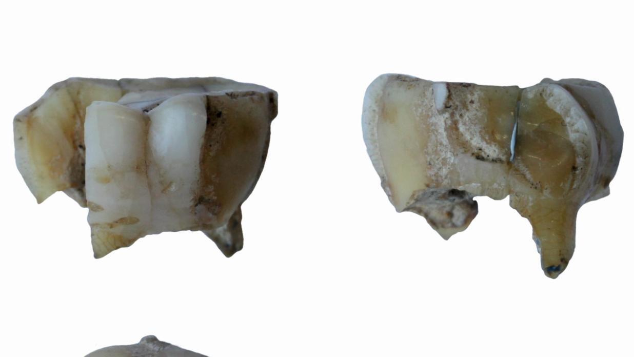 Die Gen-Analyse der sehr alten Zähne liefert einen weiteren Beleg für die These, dass es eine Verbindung zwischen Sibirien und Amerika gab.