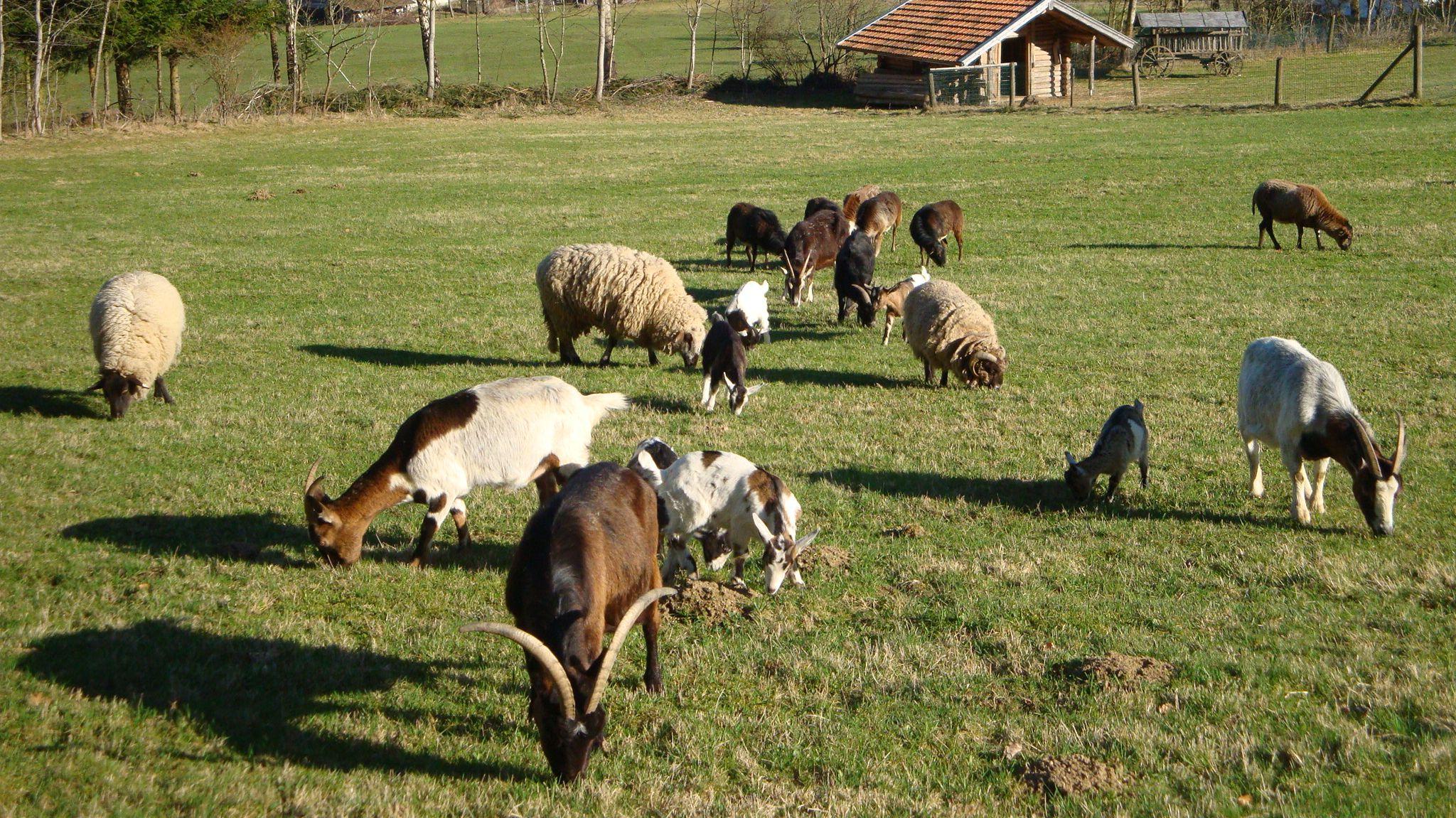 Auf dem Gnadenhof in Zell wird das Konzept verfolgt, dass alle Tiere miteinander leben und nicht separiert werden