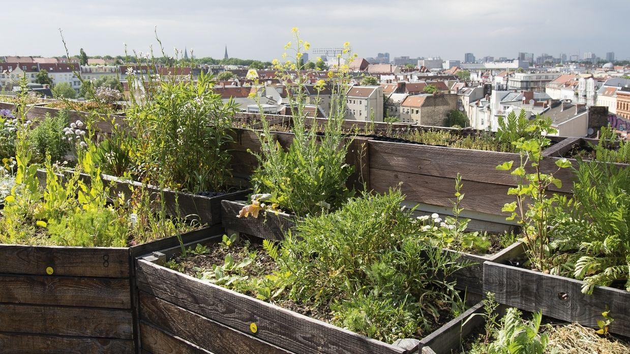 Umweltministerin Schulze will Städte grüner machen