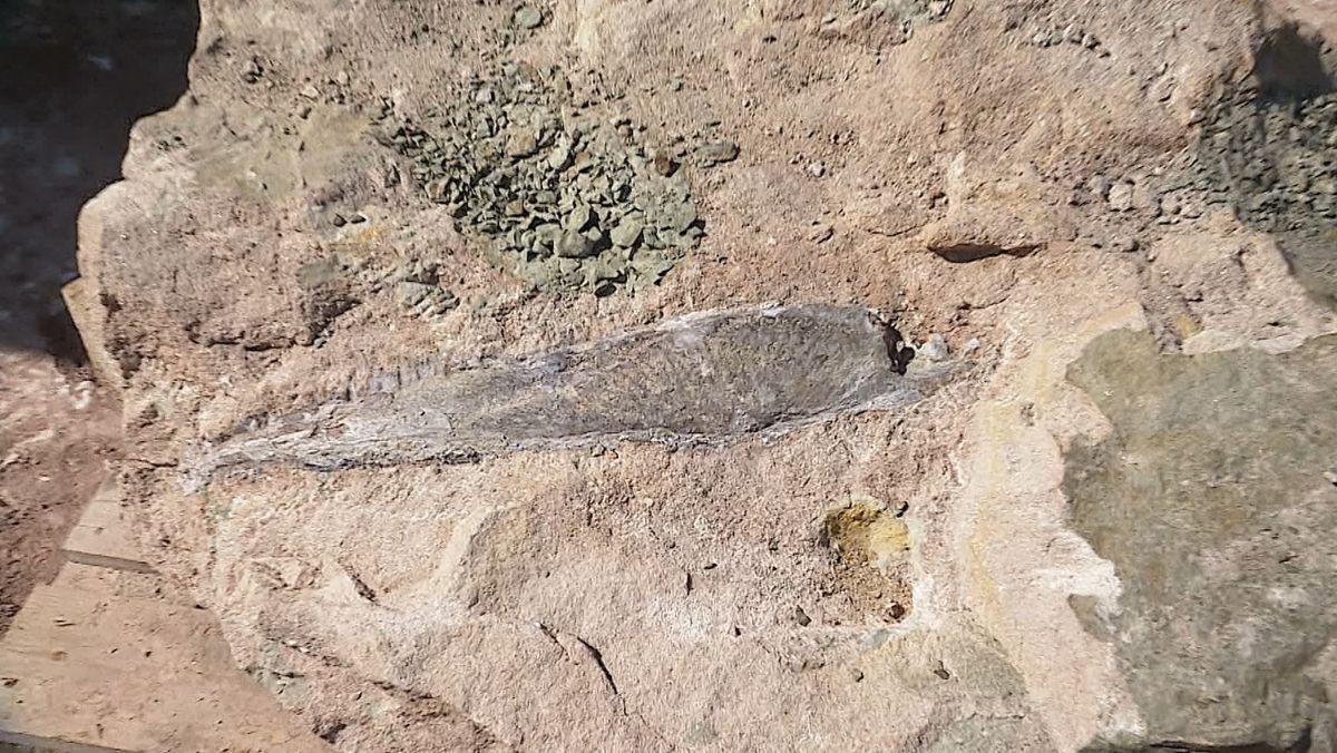 Der Unterkiefer eines Dinosauriers wurde in einem Steinbruch im Steigerwald gefunden.