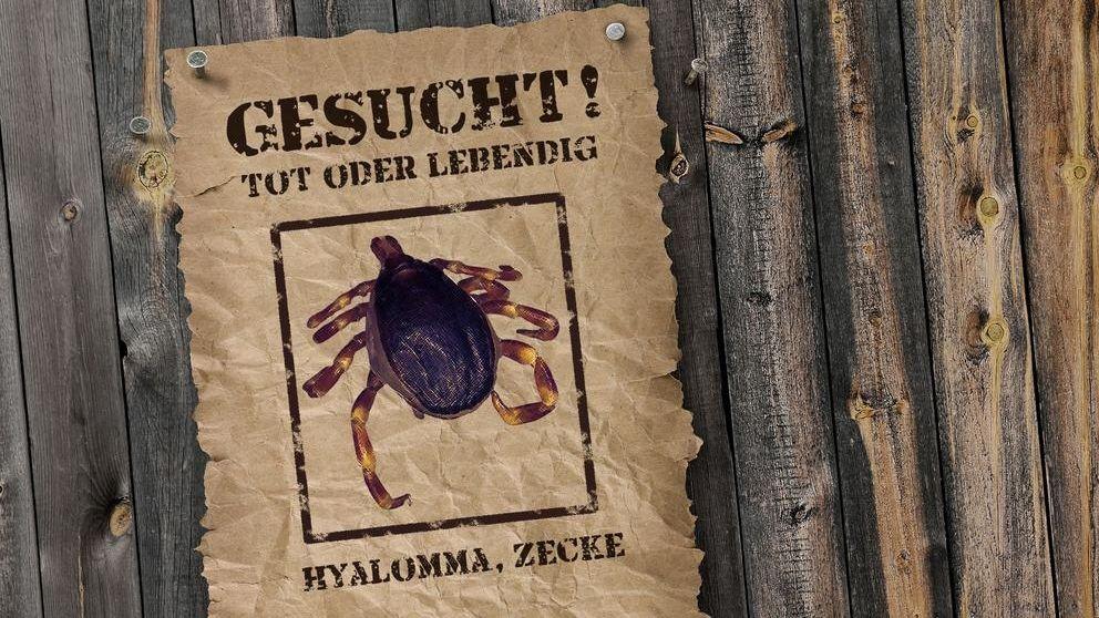 Die Universität Hohenheim ruft dazu auf, Zecken der Gattung Hyalomma zu melden. Die tropische Zecke kann gefährliche Krankheiten übertragen.