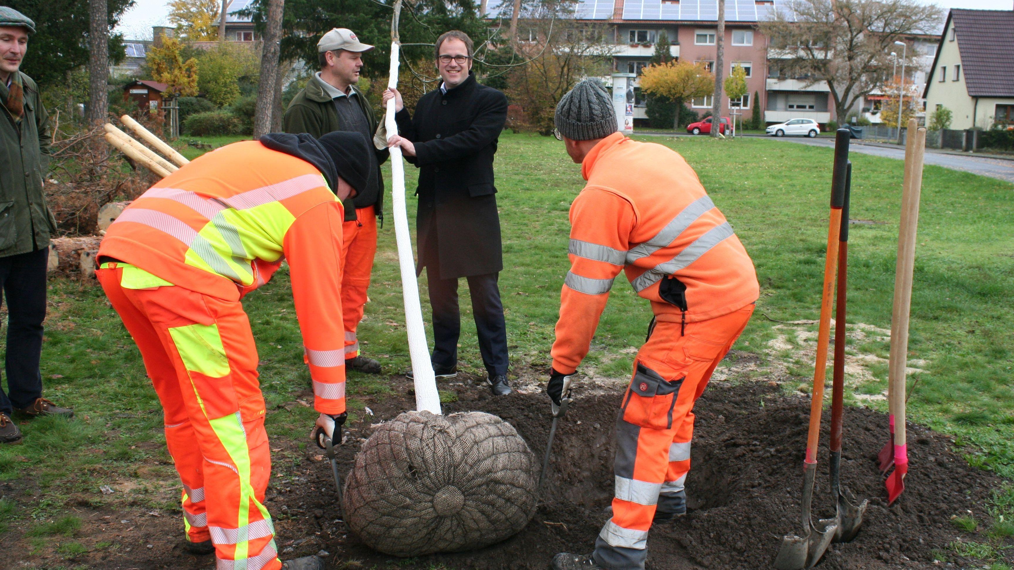Erlangens Oberbürgermeister Florian Janik (SPD) pflanzt einen Baum