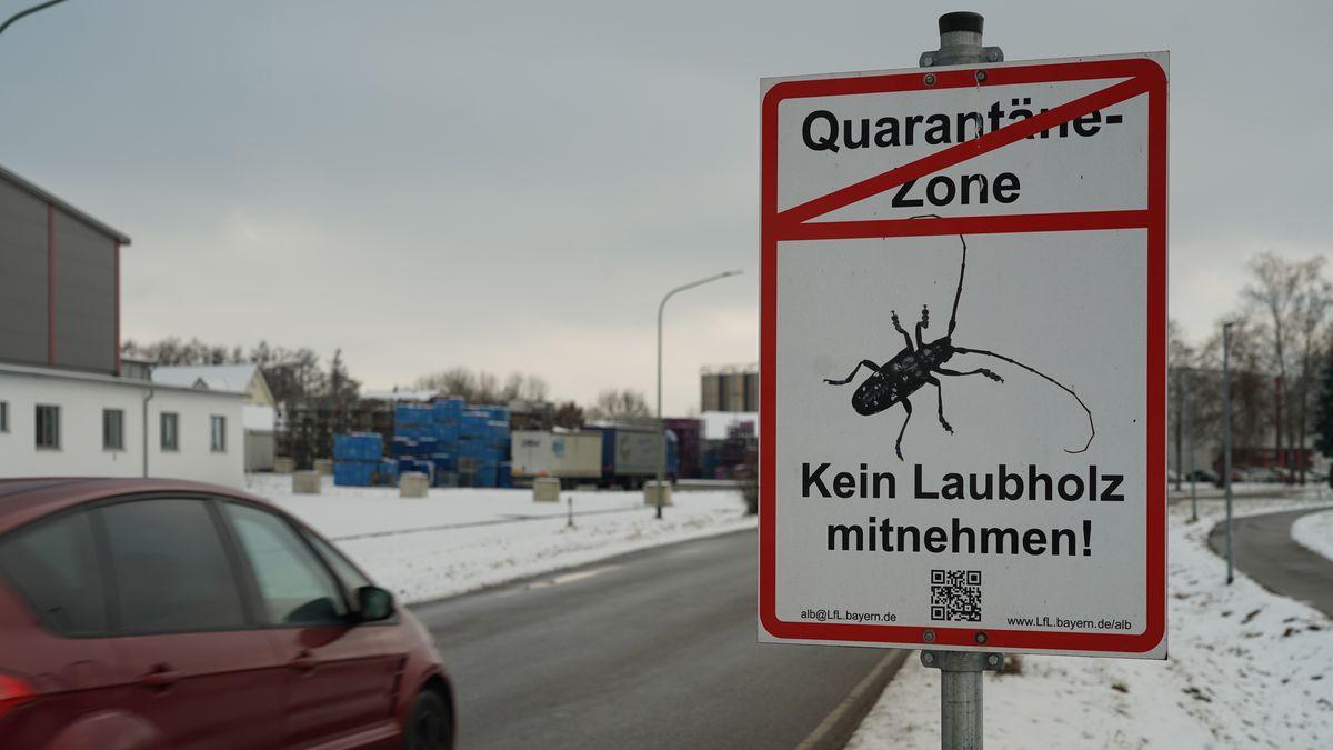 Quarantänezone: Der Laubholzbockkäfer muss draußen bleiben.