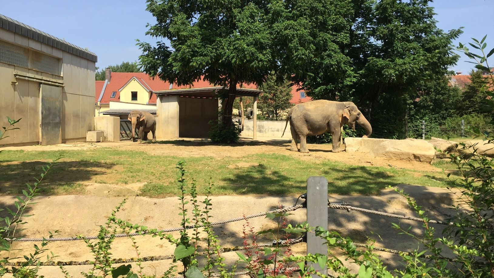 Die Elefantenweibchen Burma und Targa im Augsburger Zoo (Archivbild)