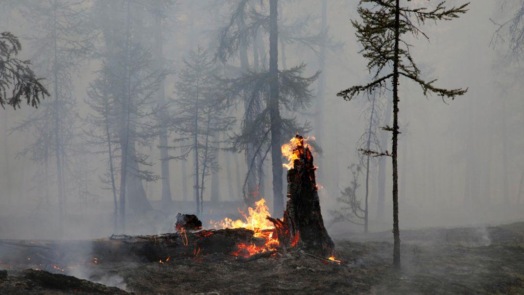 Bild eines brennenden Baumes in einem russischen Wald. Angesichts verheerender Waldbrände in Russland rechnen Experten mit langfristigen Folgen für den Permafrostboden.
