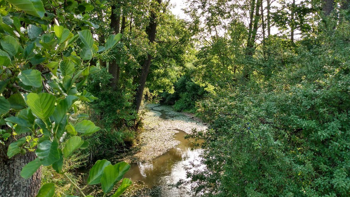Blick auf die Zenn, umgeben von Bäumen, im Wasser wachsen viele Algen.