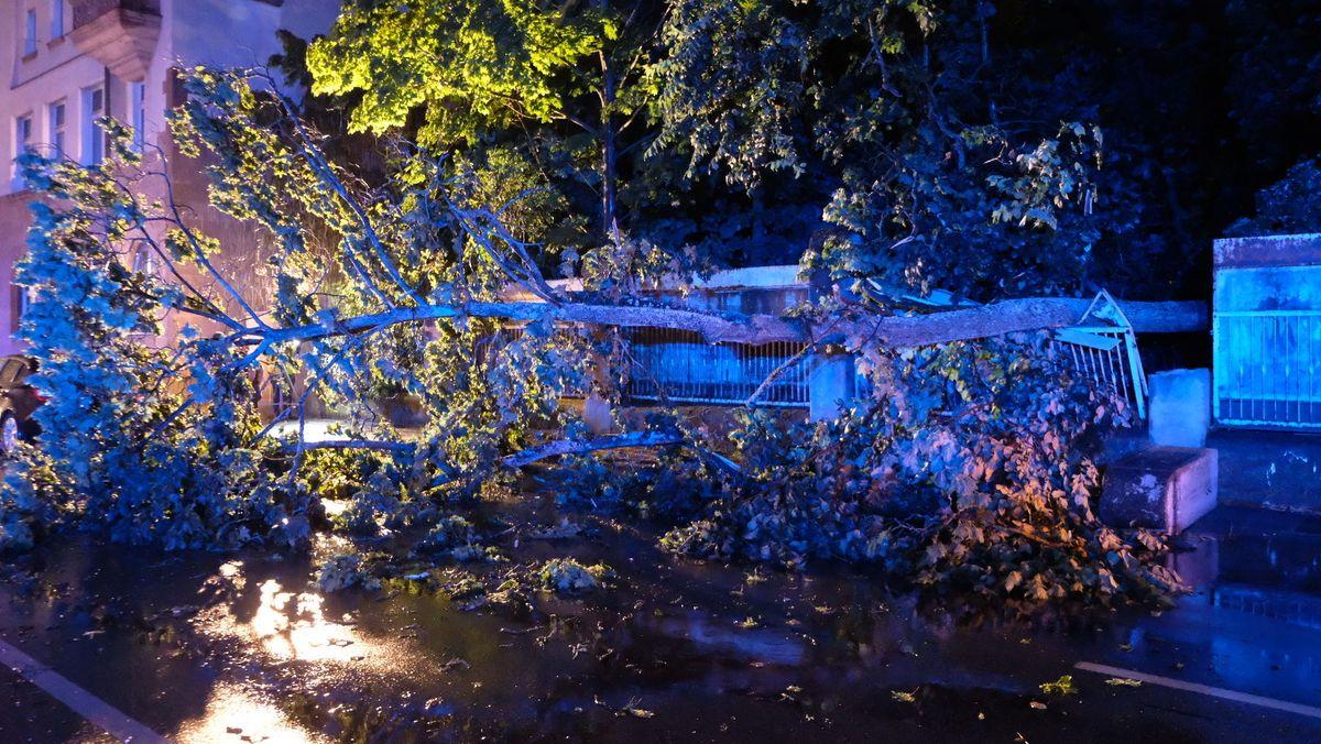 umgestürzter Baum liegt bei Nacht auf einer Straße