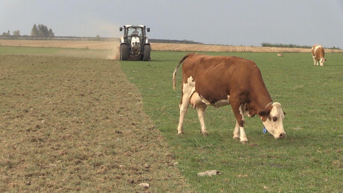Bauer plügt Weideland zur Ackerfläche um