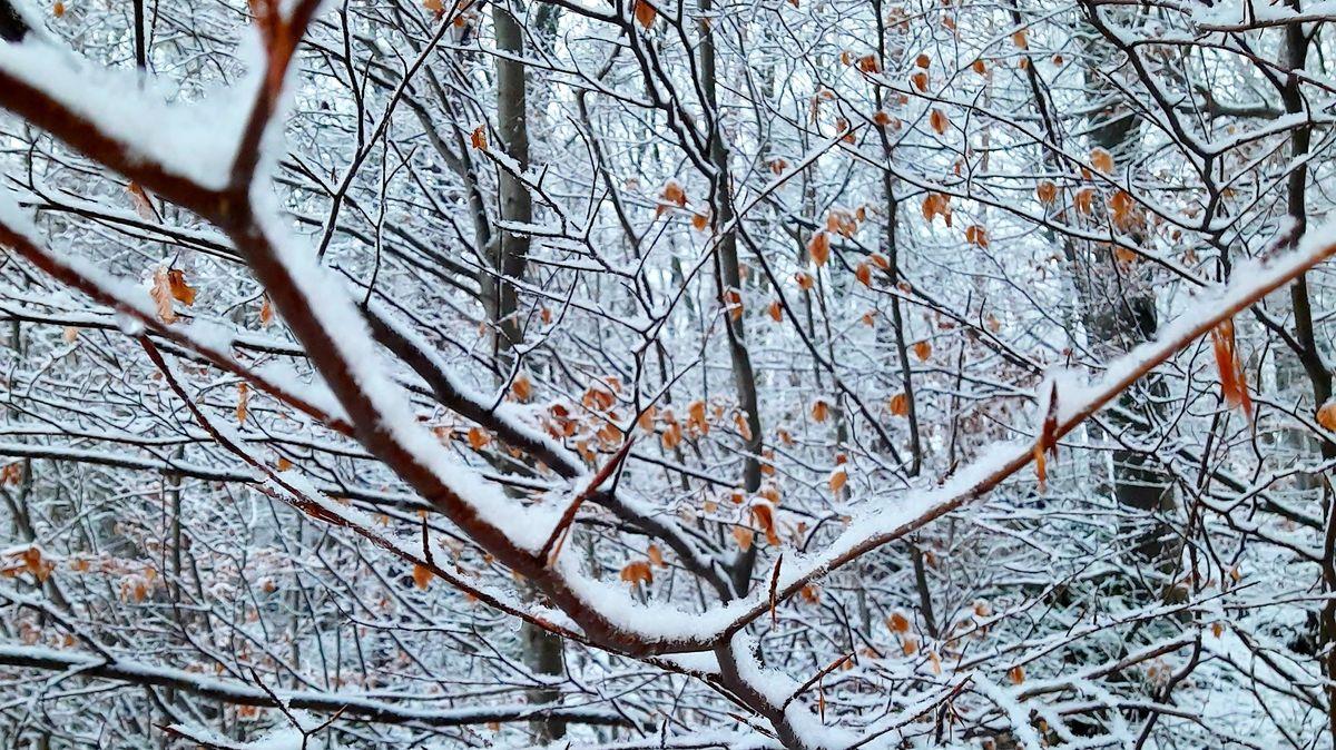 Die Wälder rund um Nürnberg kommen gut durch den Winter.