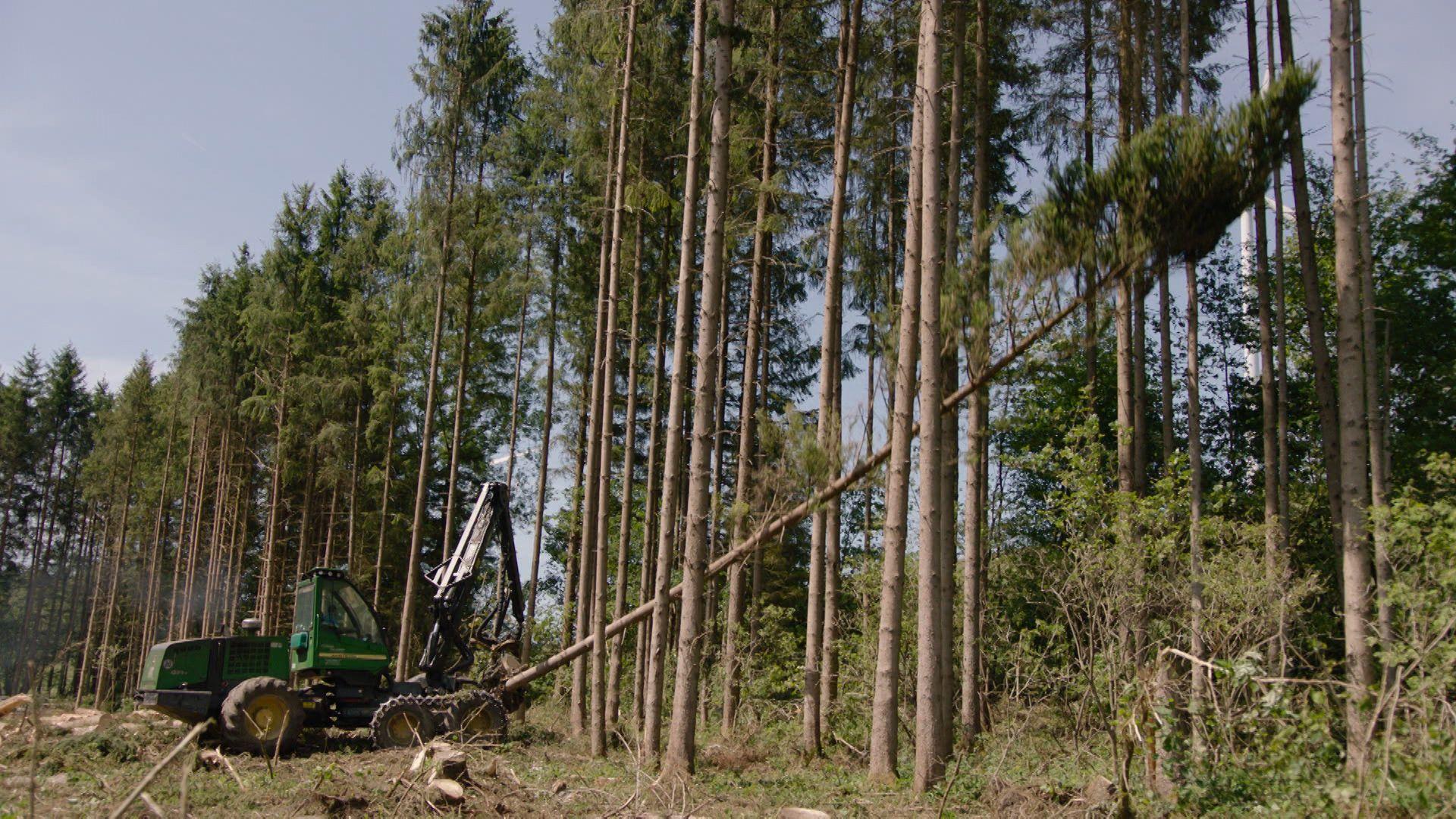 Ein Baum wird gefällt