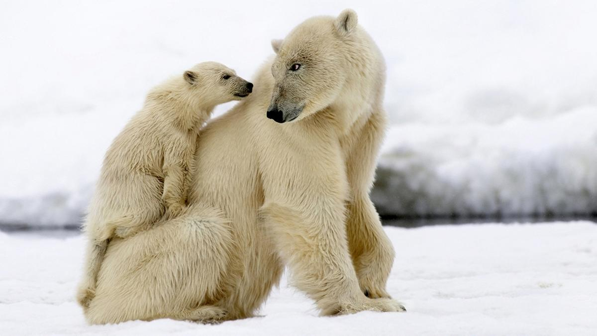 Der erste Winter - Wie Tierkinder die Kälte meistern : Der erste Winter - Wie Tierkinder die Kälte meistern