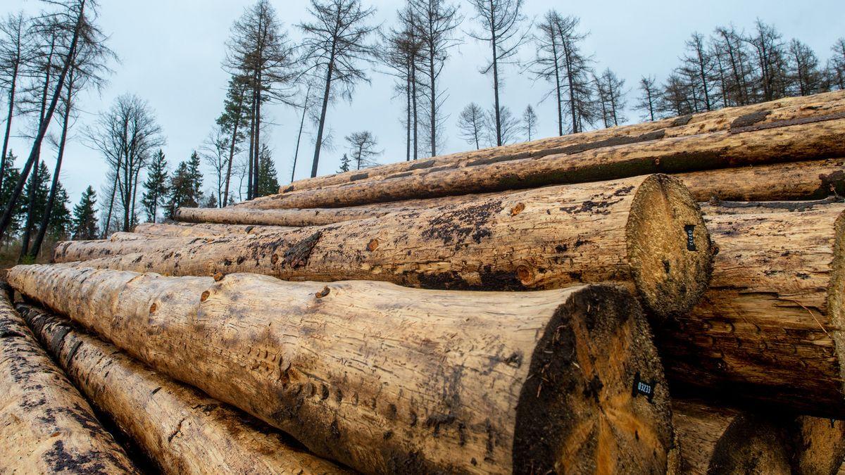 Die Preise für Bauholz sind zuletzt gestiegen