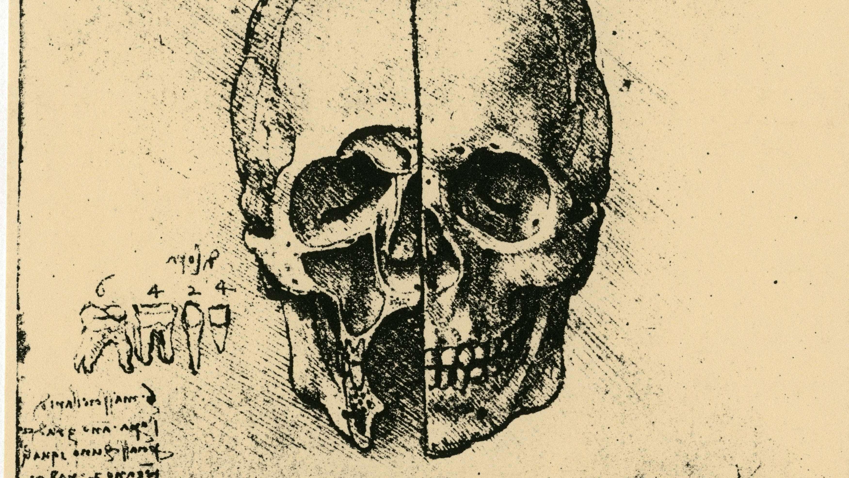 Anatomie-Skizze von Leonardo da Vinci