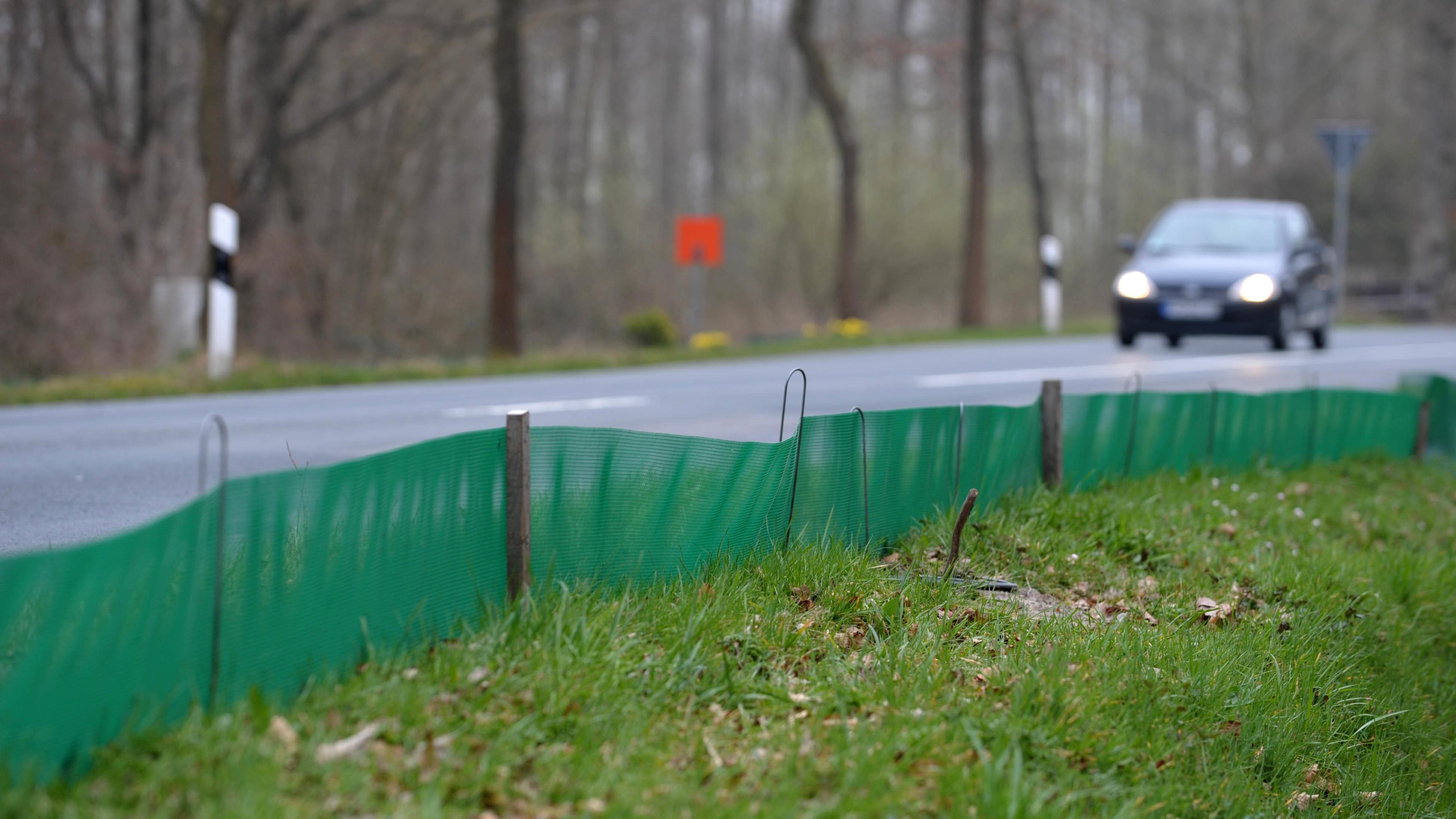 Ein Schutzzaun neben einer Landstraße - damit sollen Kröten, Frösche und Molche geschützt werden.