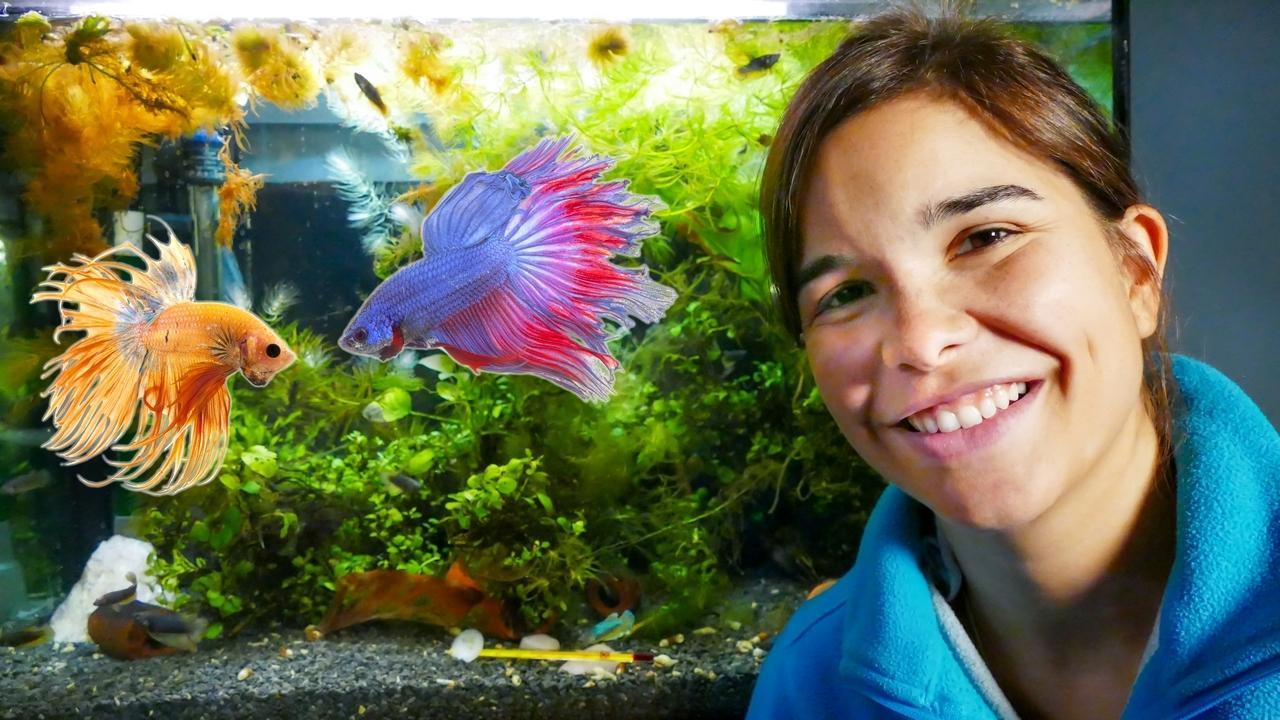 Anna Und Die Haustiere Susswasserfische