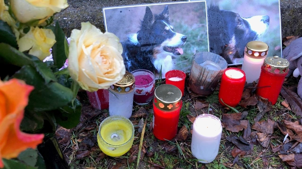 Freunde und Bekannte haben vor dem Haus von Fred Kerscher Kerzen und Fotos der beiden getöteten Hündinnen aufgestellt.