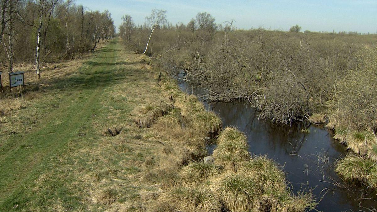 Das Donaumoos bei Leipheim: Ein Wassergraben, Gras, Büsche und Birken
