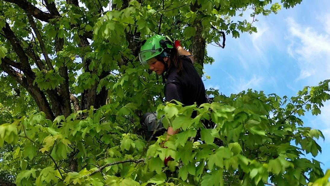 Ein Seil sichert die Baumpflegerin