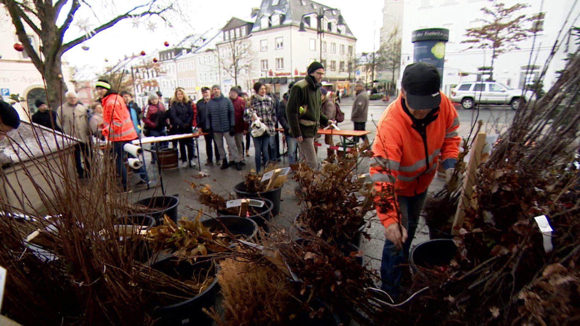 Am 30. November konnten sich Privatpersonen und Vereine vor dem Hofer Rathaus kostenlos einen Baum abholen.
