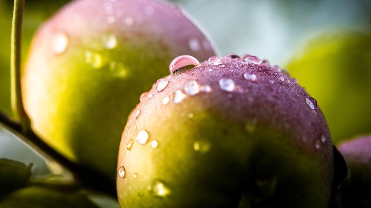 Morgentau auf Äpfeln