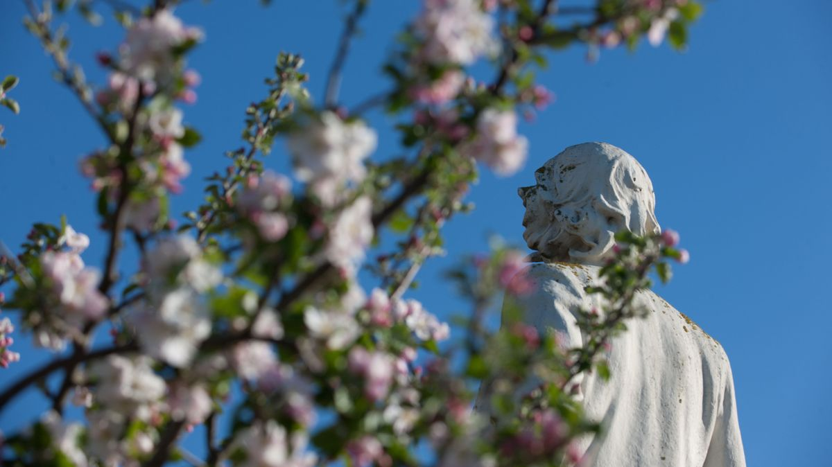 """Eine Statue Gustave Flauberts in der Normandie, davor blühende Apfelzweige. Faluberts Debüt """"Madame Bovary"""" ist einer der Schlüsselromane der literarischen Moderne."""